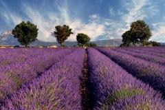 WE 600_1010x610_Lavendel